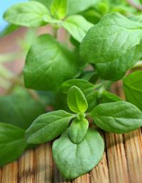 09-Benefits-of-Spices-Oregano-1